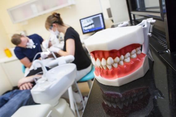 Oral Health Professional