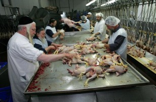 Isreali Poultry Industry Threatened By Bird Flu Scare