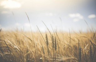How Can We Make the Food Industry More Sustainable?