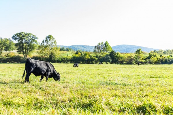 What Makes Grass-Fed Beef Superior?