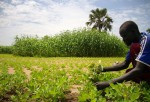 South Sudan farmer