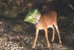 Deer Doritos Bag