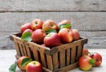 Apples contain antioxidants