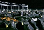 Cows at the Synlait dairy farm stand in the darkness of night