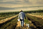 Bread and Oil: California's Central Valley