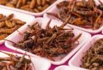 Bugs: Are They Healthy Food Choice?