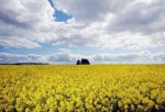 UK Government Advisors Fail To Give Clear Decision On GM Crops