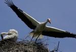 Birdpark Walsrode Prepares For Summer Visitors