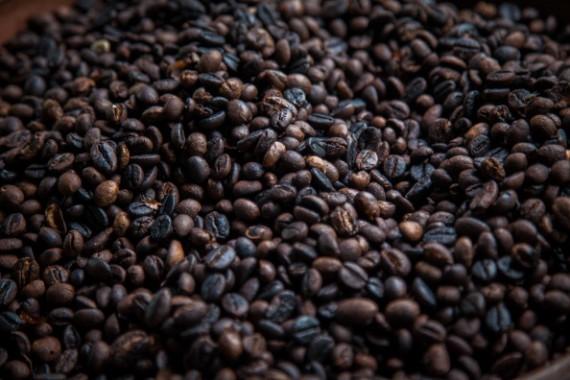 Civet Coffee In Indonesia