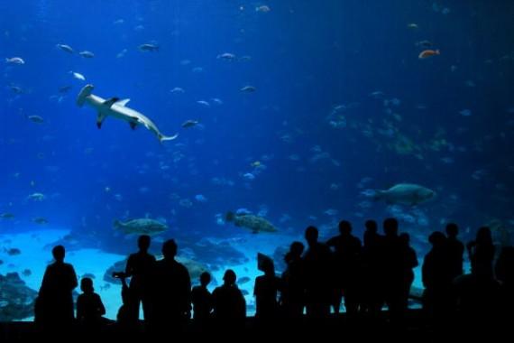 People Visit The Georgia Aquarium