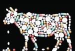 To Remove Antibiotics In Livestock Folium Science Uses CRISPR