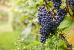 France Is Changing Key Wine Regulations