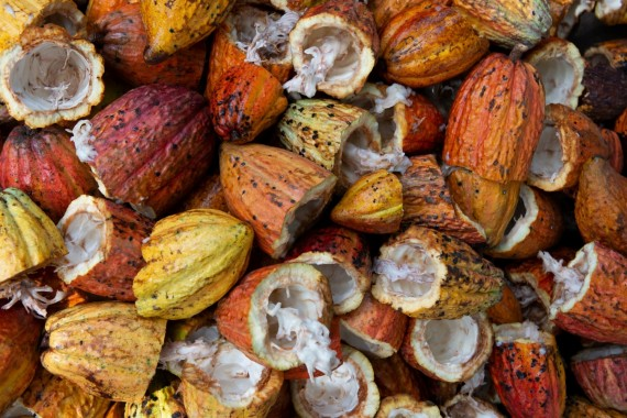 The Connection Between Cacao and Weight Loss