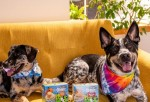 Ben & Jerry's Introduces Pet-friendly Ice Cream Treat For Man's Best Friend