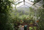 How to Use a Backyard Greenhouse to Grow Your Own Food